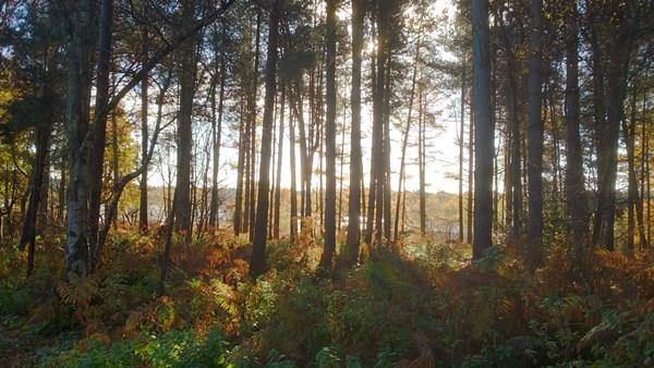 Image result for delamere forest Fox Howl